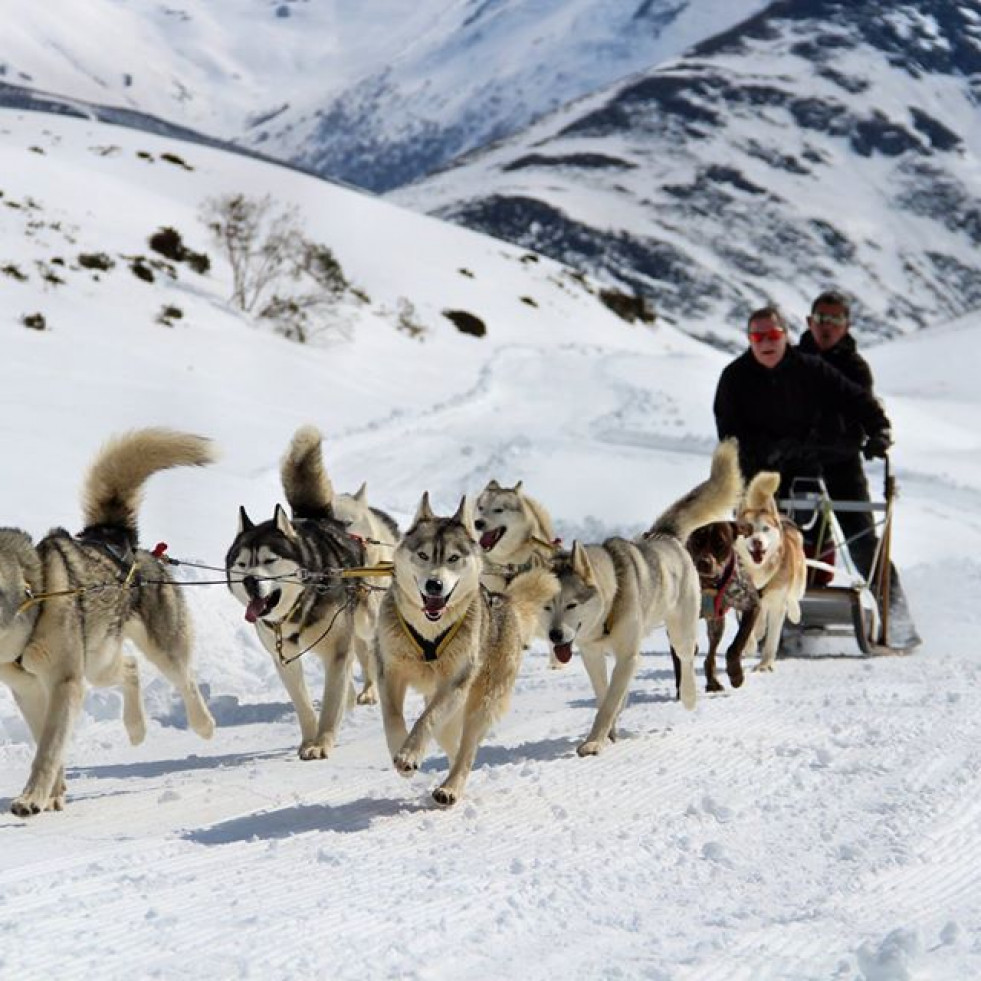 Mushing leon club
